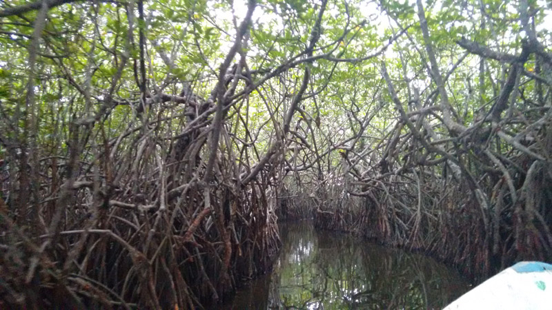 Madu River - Mangroven-Tunnel