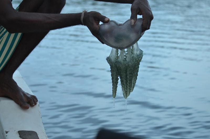 Madu River - Qualle