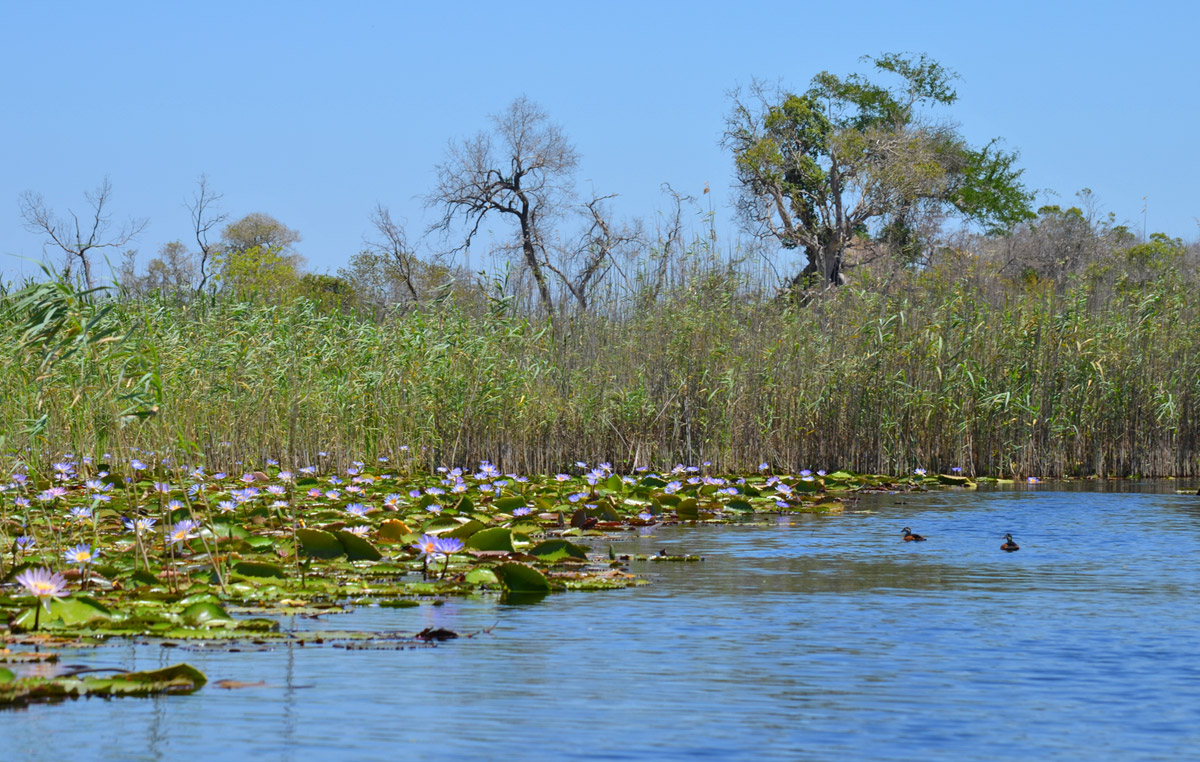 Mosambik Govuro Waterways