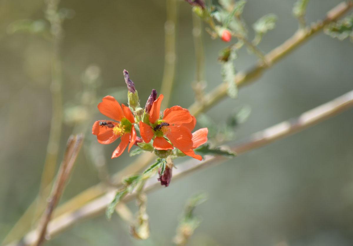 Petrified Forest Nationalpark